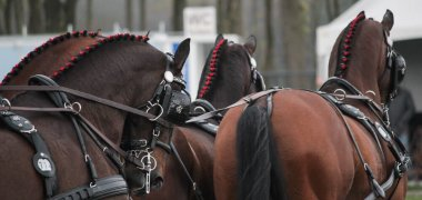 World Championships for Four-in-Hand horses postponed