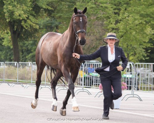 WCH Kronenberg 2018: two horses out